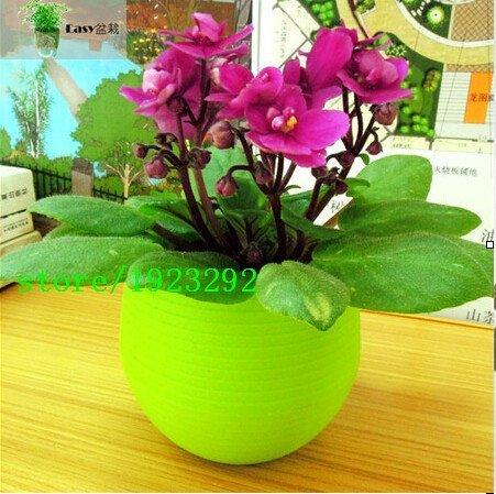 Graines New 200 pcs / sac Saintpaulia Seeds Flower Seed Variété complète jardin à domicile