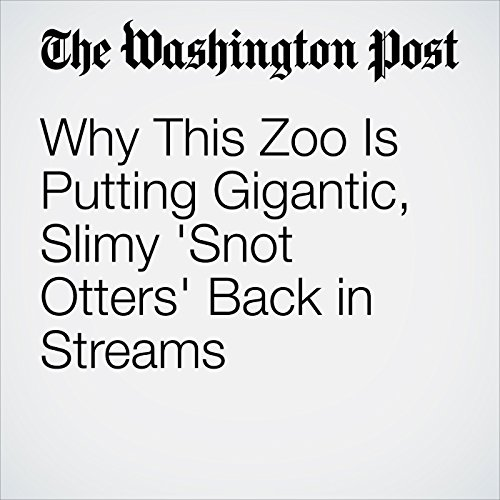 Why This Zoo Is Putting Gigantic, Slimy 'Snot Otters' Back in Streams copertina