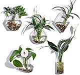 KNIKGLASS - Macetas de Cristal para Colgar en la Pared, diseño geométrico, macetas, macetas de Aire, florero, Plantas de Aire, terrarios para Colgar en la Pared, Paquete de 5