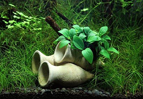 Dekoimtrend Garnelen Amphore mit Anubias Bonsai Wasserpflanze Aquarium Aquariumpflanze