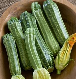 David's Garden Seeds Zucchini Costata Romanesco 2753 (Green) 25 Non-GMO, Heirloom Seeds