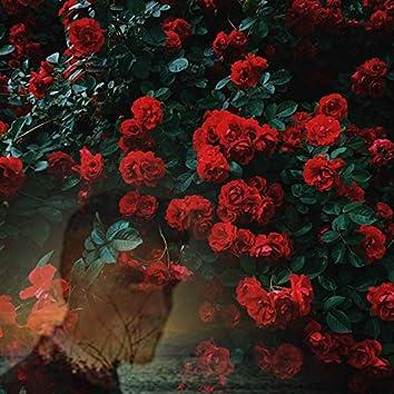 Un Trandafir Creste La Firida Mea
