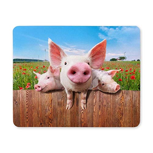 Cut Pig Mousepad,Gaming Mouse pad,Mouse Pad Young Pigs on The Farm Looking Over The Fence Gaming Mouse Pad for Computers