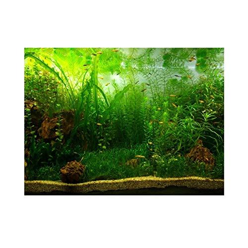 Wasser Gras Stil Aquarium Aquarium Poster Verdicken PVC Kleber Hintergrund Aufkleber Wallpaper Poster Aquarium Hintergrund Dekor (61 * 41cm)