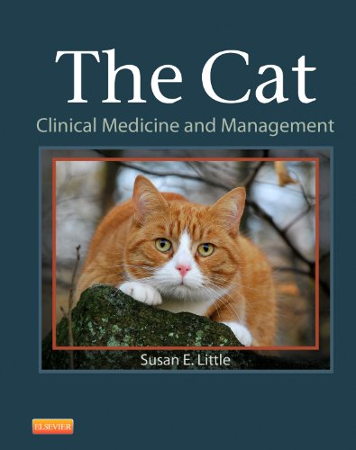 The Cat: Clinical Medicine and Management