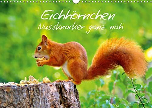 Eichhörnchen-Nussknacker ganz nah (Wandkalender 2021 DIN A3 quer)