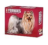 Yorkies 2022 Box Calendar - Dog Breed Daily Desktop