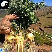 peruvianum 1000 Samen Lepidium meyenii Maca auch L Schwarze Knolle