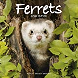 Ferret Calendar - Cute Animals Wall Calendar - Calendars 2021 - 2022 Wall Calendars - Ferrets 16 Month Wall Calendar by Avonside