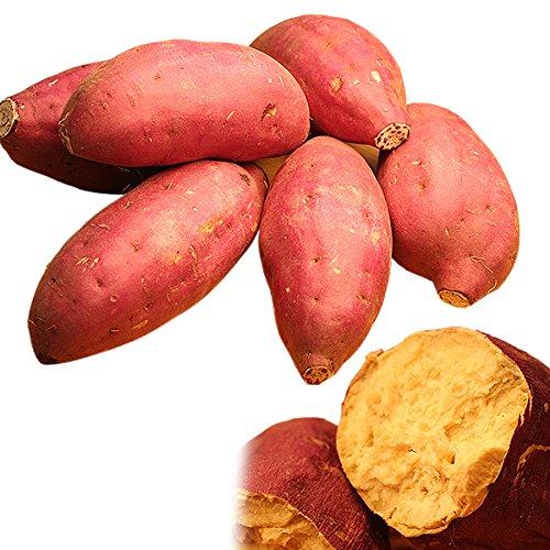 野菜 さつまいも 紅あずま ベニアズマ 約2.5kg 芋(gn)