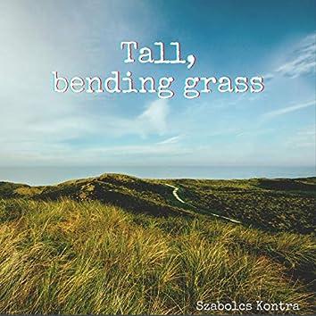 Tall, bending grass