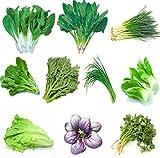 Vegetales de jardín Verde Semillas chinas orgánicas 10 variedades diferentes Cantidad 8000+ para plantar fuera (10 Variedades-A)