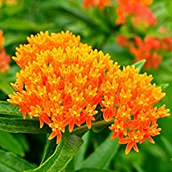 The best flowers to grow for an organic garden beginners guide this is a late bloomer and has a cluster of pretty orange flowers mightylinksfo