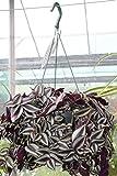 Garden Market Place Indoor Plants