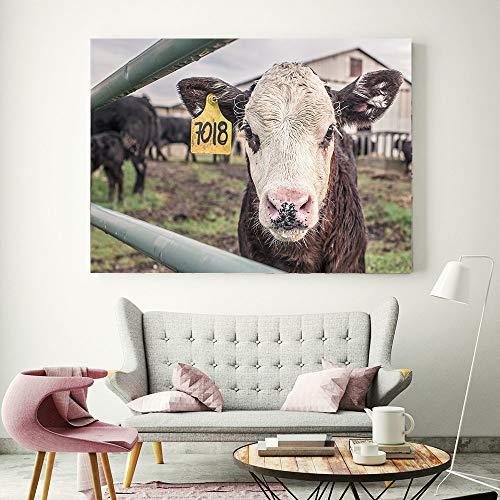 tzxdbh Hd Print Highland Koe Dieren Posters Moderne Home Decoratie Canvas Schilderen Muur Kunst Foto's Voor Woonkamer Geen Ingelijste 50x70cm no frame No Frame