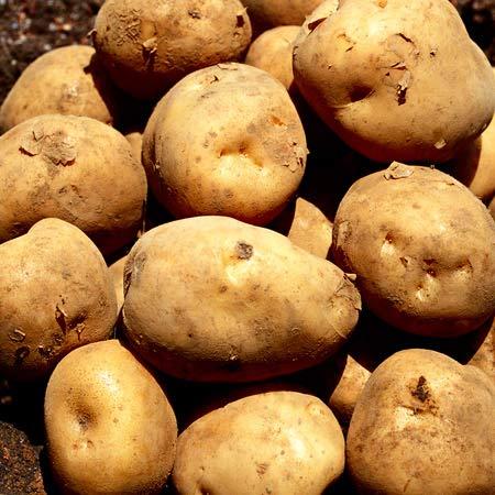 北海道産 じゃがいも 男爵 いも 10kg M L サイズ ジャガイモ 農協 共選 送料 無料