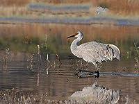 ジグソーパズル500ピース子供写真鳥ツル水上を歩く動物クリスマスプレゼント52x38cm