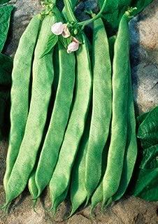 David's Garden Seeds Bean Bush Jumbo GG7183 (Green) 50 Non-GMO, Open Pollinated Seeds