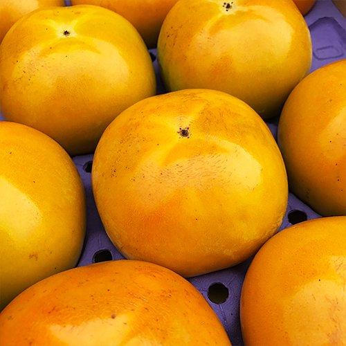 【 九州産 】 太秋柿 (たいしゅうかき) 高級 (箱込 約1.5kg前後 (3〜8玉))