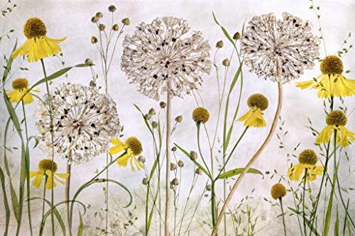 Kunst für Alle Impresión artística/Póster: Mandy Disher Alliums and heleniums - Impresión, Foto, póster artístico, 75x50 cm