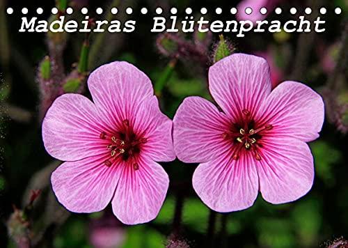 Madeiras Blütenpracht (Tischkalender 2022 DIN A5 quer)