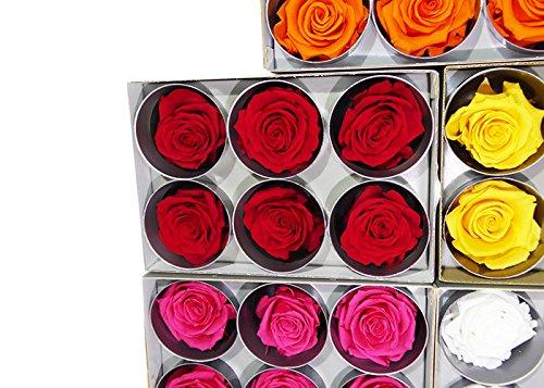 Loisirs créatifs RST/220G Tète de Rose, Fleur, Rouge, 5 x 5 x 5 cm