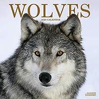 WOLVES WOLF 2020カレンダーウォールスクエア(30cm x 30cm)新しく、AVONSIDEカレンダーで密封