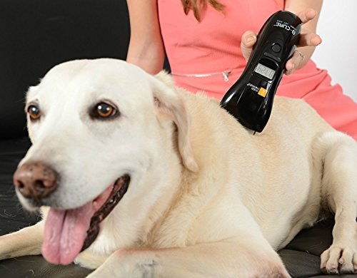 B-cure Laser Vet Device for Pets: A Home Laser Therapy, Accelerates Healing and...
