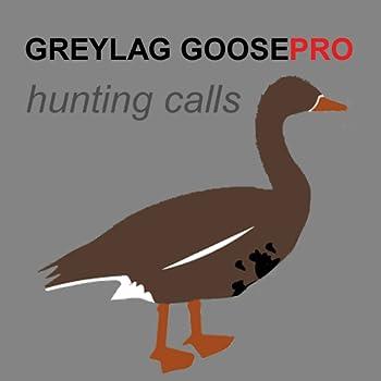 REAL Greylag Goose Hunting Calls - Greylag Goose CALLS & Greylag Goose Sounds!  ad free  BLUETOOTH COMPATIBLE