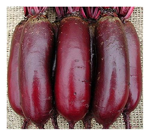 Premier Seeds Direct ORG204 - Verdura (Remolacha)