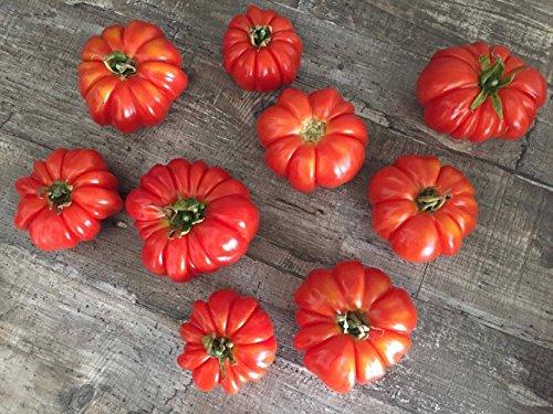 Russische Reisetomate 10 Samen - Starke Pflanze mit viel Früchten -