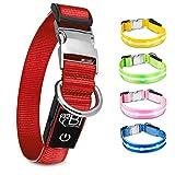 BI International ® Hundehalsband Leuchtend & Aufladbar...