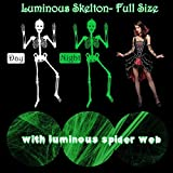 Halloween Hanging Luminous Skeleton Decorations, Full Body Glow-in-The-Dark Skeleton and Spider Web with 4 Spiders for Halloween Party Bar Wall Sticker Decorations Outdoor Hanging Ornaments Props