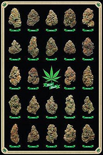 Close Up Cannabis Poster Best Buds Marihuana-Sorten (61cm x 91,5cm) + 2 St. transparente Posterleisten mit Aufhängung