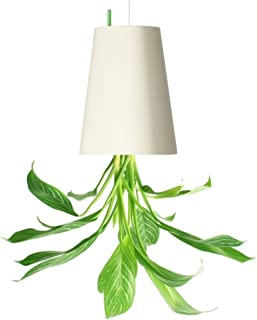 Best white hanging plant pot Reviews