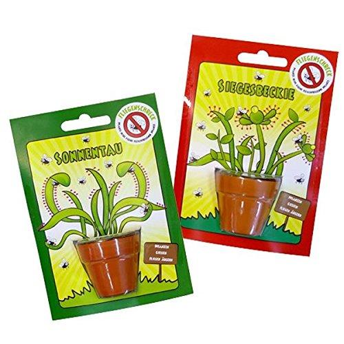 220082 2x Fliegenschreck, Samen für Sonnentau oder Siegesbeckie, Mini Pflanze gegen Fliegen, Geschenkidee, 2 Stück