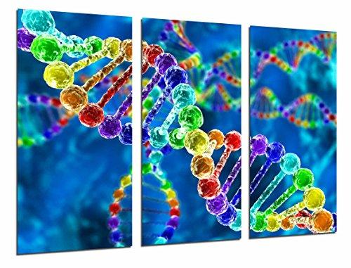 Poster Fotográfico Biologia, Ciencia, Cromosoma, Cadena ADN de Colores Tamaño total: 97 x 62 cm XXL