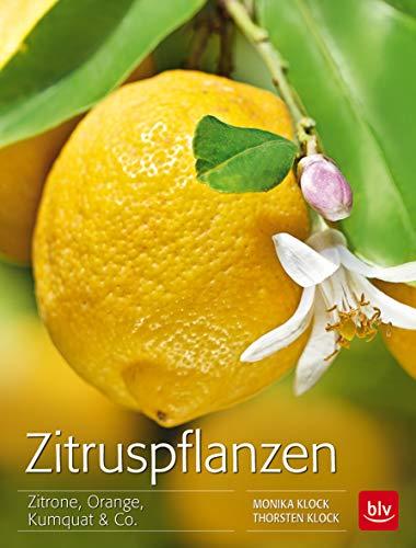 Zitruspflanzen: Zitrone, Orange, Kumquat & Co.