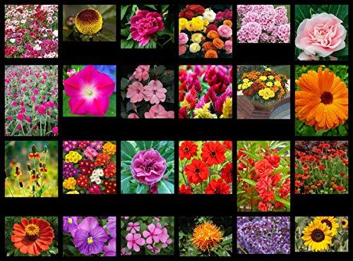 SANHOC Graines Paquet: Red Garden Balsam: Graines de Fleurs - 24 variétés intéressantes de Notre Collection - Sélection # 1