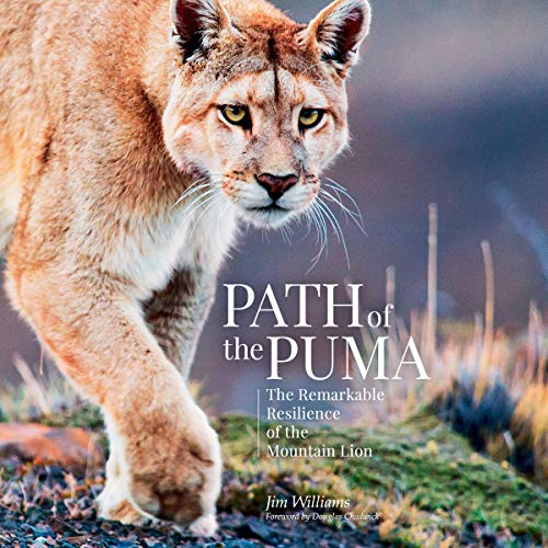 Path of the Puma Audiobook By Jim Williams, Joe Glickman - contributor, Douglas Chadwick - foreword cover art