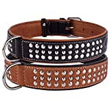 CollarDirect Studded Dog...image