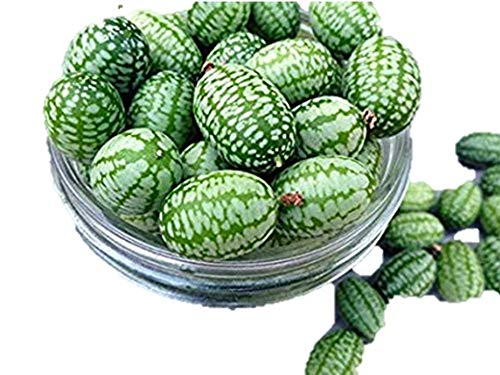 スイカきゅうり 種 12粒
