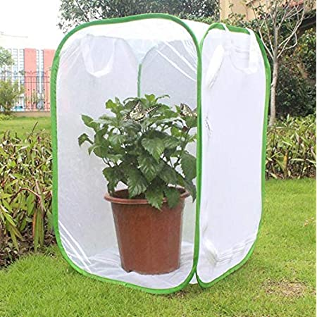 Bug Terrarium Pop-up 5.5 x 7 Tall for Kids CatYou Mini Insect and Butterfly Habitat Insect Mesh Cage Caterpillars House