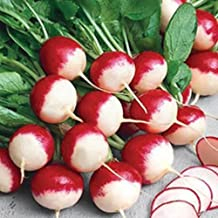 Sparkler White-Tip Radish Heirloom Non-GMO Garden Root Vegetable 3g (~270 Seeds)