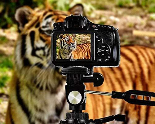 Puzzles Iq Tiger