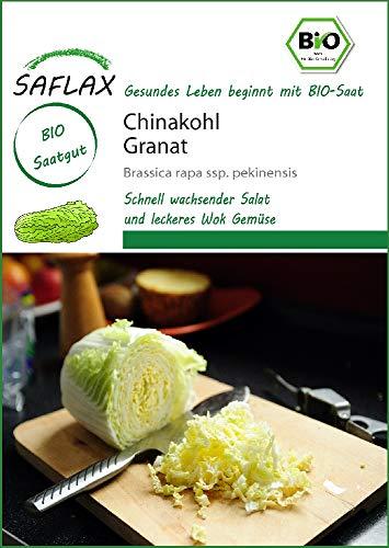Saflax 18701 Chinakohl Granat (Bio-Chinakohlsamen)