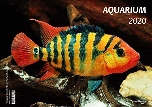 Kalender AQUARIUM 2020 - Großformat 29,7 x 42 cm (A3) - 12 Fotografien von faszinierenden Aquarienbewohnern - 1 Titelbild mit edlem separatem Folienblatt