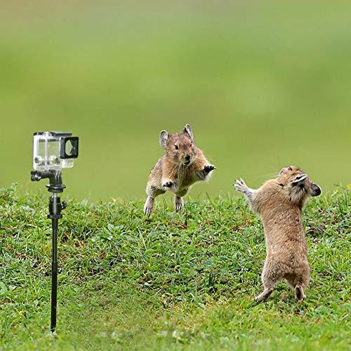 Accesorios de montaje para cámaras de campo para soporte de estaca de...