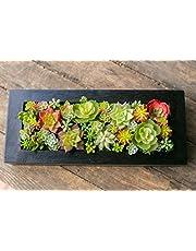 多肉植物 寄せ植え ギフト 多肉フェイクグリーンBOX