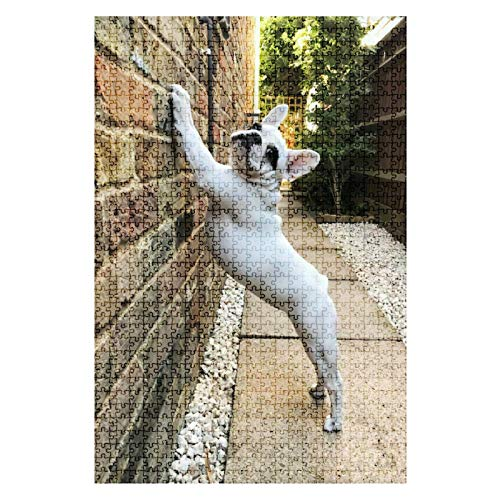 GAROLINAPW Wooden Jigsaw Puzzle French Bulldog Puppy Stretching in The Morning on a Wall 1000 Pieces for Adult Children Educational Decompression DIY Toys Gifts Fits Together Perfectly Multicolor
